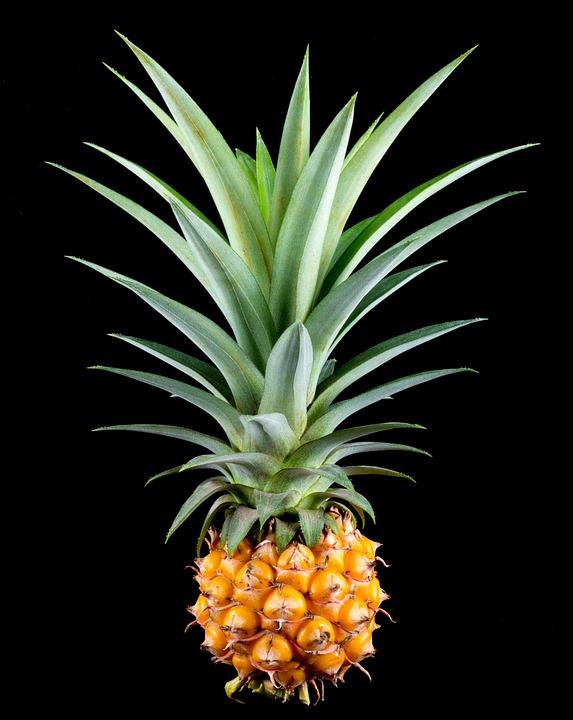 Come Coltivare gli Ananas